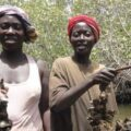Casamance women fishing for oysters.