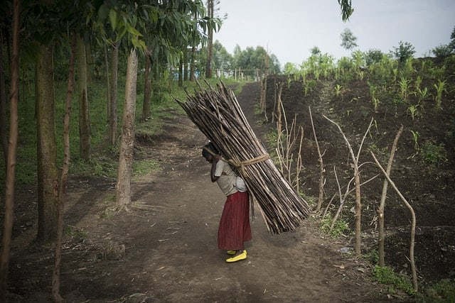 Collecting firewood at the Kanyaruchinya IDP camp, Congo