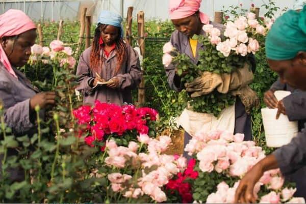 Flower Tambuzi Kenya HIVOS